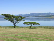 Árvores com o lago no fundo fotografia de stock royalty free