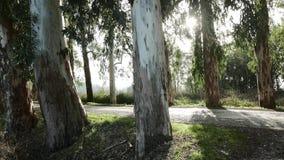 Árvores com os raios de Sun através da folha 4K filme