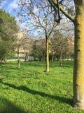 Árvores com sombras Fotografia de Stock Royalty Free