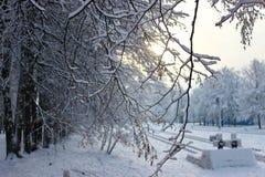 Árvores com tampões da neve Testes padrões do inverno Ar congelado Céu azul sob árvores Ramos com neve Hoarfrost em árvores Estaç fotografia de stock