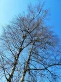 árvores com um ninho contra o céu azul foto de stock