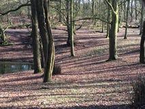 Árvores com um pôr do sol Foto de Stock