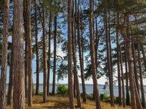 Árvores com uma opinião do mar imagem de stock royalty free