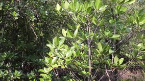 Árvores com vento na selva no kohkood Tailândia Apropriado para uma natureza ou um fundo agrícola Vento através das árvores no ju video estoque
