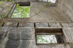 Árvores com Windows de uma casa abandonada foto de stock royalty free