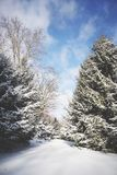 Árvores coníferas cobertos de neve em Sunny Day brilhante fotos de stock royalty free
