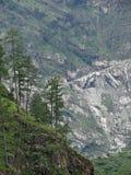 Árvores coníferas em um fundo verde rochoso da inclinação de montanha Imagens de Stock