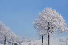 Árvores congeladas Fotografia de Stock Royalty Free