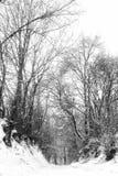 Árvores congeladas imagens de stock