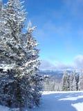 Árvores congeladas fotografia de stock