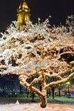 Árvores congeladas de Boston imagens de stock royalty free