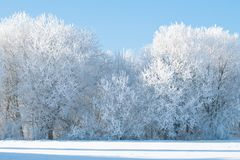 Árvores congeladas no campo foto de stock