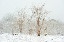 Árvores congeladas no parque ou na floresta com neve e gelo no dia de inverno enevoado frio imagem de stock royalty free