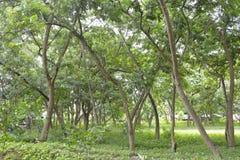 Árvores crescidas nos locais do Salão municipal de Matanao, Davao del Sur, Filipinas fotos de stock