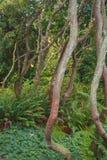 Árvores Curvy Foto de Stock Royalty Free