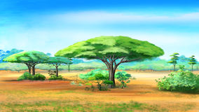 Árvores da acácia no arbusto africano ilustração do vetor