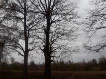 Árvores da arrecadação na queda do país fotos de stock royalty free