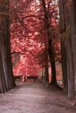 ?rvores da avenida de parque foto de stock royalty free