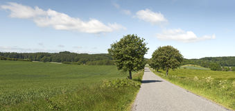 Árvores da borda da estrada Foto de Stock Royalty Free
