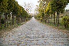 Árvores da borda da estrada em rochoso Fotografia de Stock