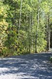 Árvores da borda da estrada Imagens de Stock Royalty Free