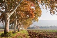 Árvores da cor do outono Foto de Stock