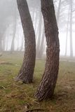 Árvores da curva Imagens de Stock Royalty Free
