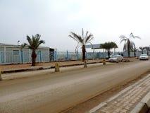 Árvores da data plantadas nas ruas de Najaf fotos de stock