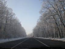Árvores da estrada do inverno Foto de Stock