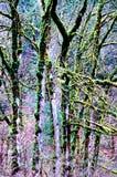 Árvores da flor de cerejeira fotos de stock