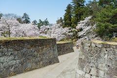 Árvores da flor de cerejeira no parque do castelo de Tsuruga Imagem de Stock Royalty Free