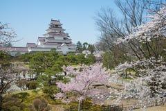 Árvores da flor de cerejeira no parque do castelo de Tsuruga foto de stock