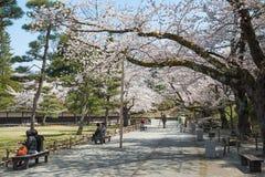 Árvores da flor de cerejeira no parque do castelo de Tsuruga foto de stock royalty free