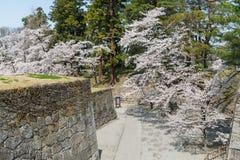 Árvores da flor de cerejeira no parque do castelo de Tsuruga fotografia de stock royalty free