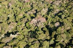 Árvores da floresta úmida atlântica fotos de stock