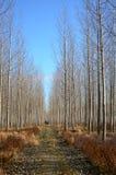 Árvores da floresta Imagens de Stock Royalty Free
