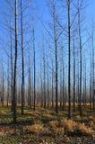 Árvores da floresta Imagem de Stock