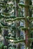 Árvores da floresta húmida Fotos de Stock