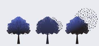 Árvores da floresta primária em seguido Fotos de Stock Royalty Free