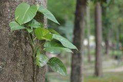 Árvores da folha fotografia de stock