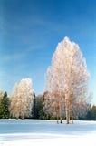 Árvores da geada do inverno imagem de stock