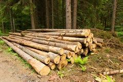 Árvores da madeira Fotos de Stock Royalty Free