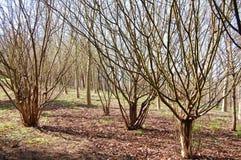 Árvores da mata de corte Fotografia de Stock Royalty Free