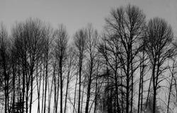 Árvores da meia-noite Imagem de Stock Royalty Free