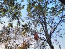 Árvores da mola Foto de Stock
