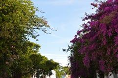 Árvores da mola Imagem de Stock Royalty Free