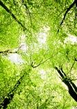 Árvores da mola Fotografia de Stock Royalty Free