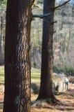 Árvores da mola de Boston no quintal imagens de stock royalty free