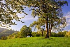 Árvores da mola e casa só Fotografia de Stock