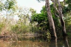 Árvores da mola que alastram para cobrir a máscara tomada da vista inferior da árvore imagem de stock